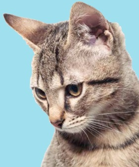 Ruim assortiment kattenvoeding