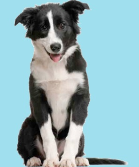 Ruim assortiment hondenvoeding